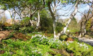 Botanischer Garten, England