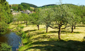 Obstwiese an der Ruwer in Trier