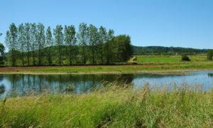 Alzette im Beweidungsprojekt Schifflingen