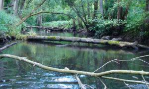 Naturnaher Bachabschnitt der Bille, Schleswig-Holstein