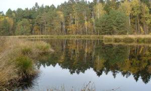 Dystrophes Gewässer in Schleswig-Holstein