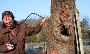 Suche nach Fledermäusen mittels Inspektionskamera