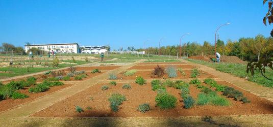 Umsetzung Heilkräutergarten Schifflingen