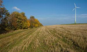 Naturschutz und Windenergie